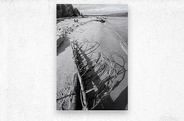 Driftwood ap 2482 B&W  Metal print