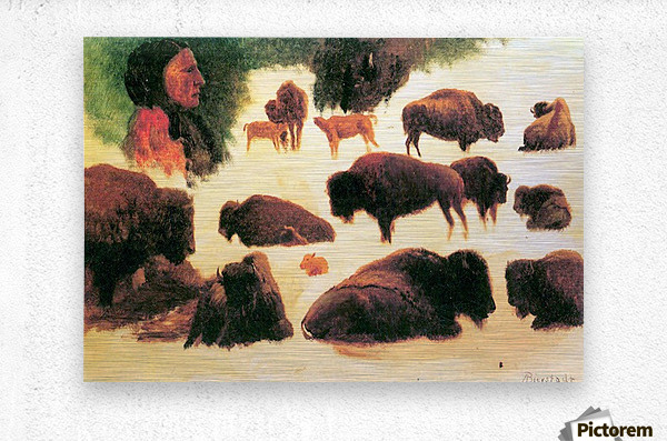Study of Buffaloes by Bierstadt  Metal print