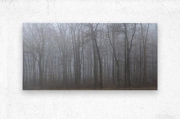 Treeline apmi 1547  Metal print