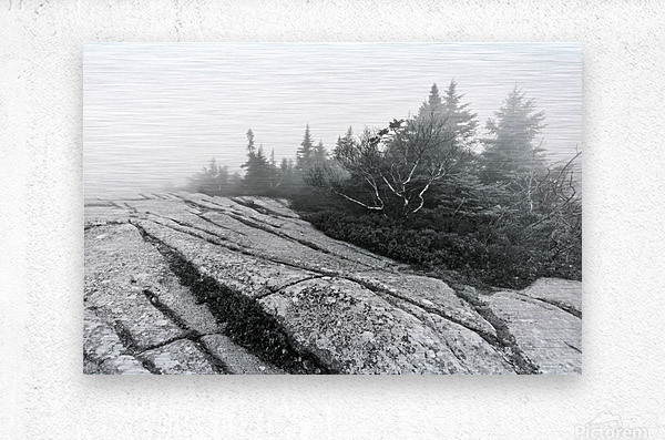 Lichen and Granite ap 2340 B&W  Metal print