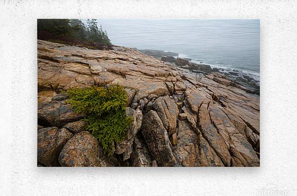 Lone Pine ap 2286  Metal print