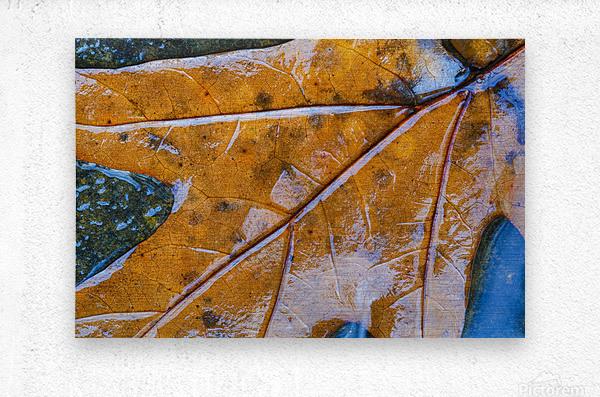Leaf ap 1970  Metal print