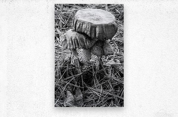 Mushrooms ap 1558 B&W  Metal print