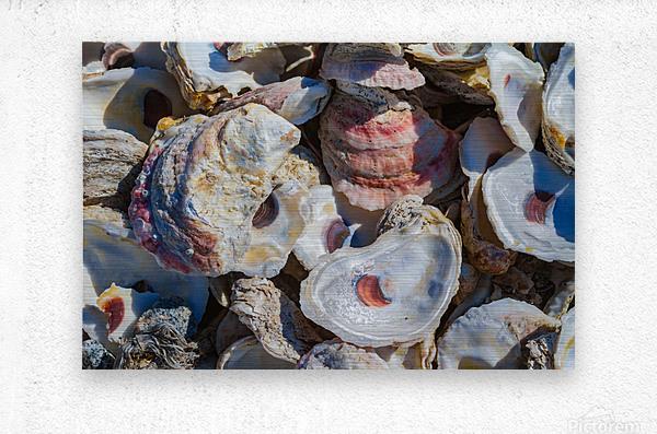 Shells ap 1747  Metal print