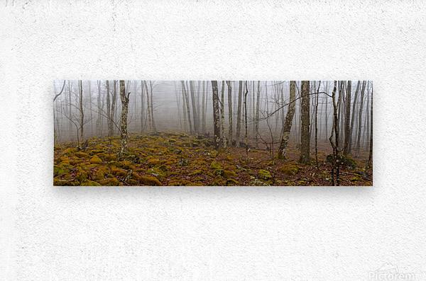 Mystic Forest apmi 1620  Metal print