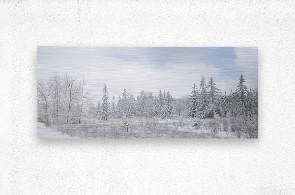 Treeline apmi 1588  Metal print