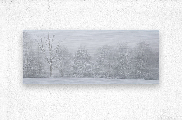 Treeline apmi 1571  Metal print