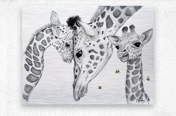 Giraffe Family   Metal print
