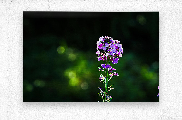 Royal Flower  Metal print