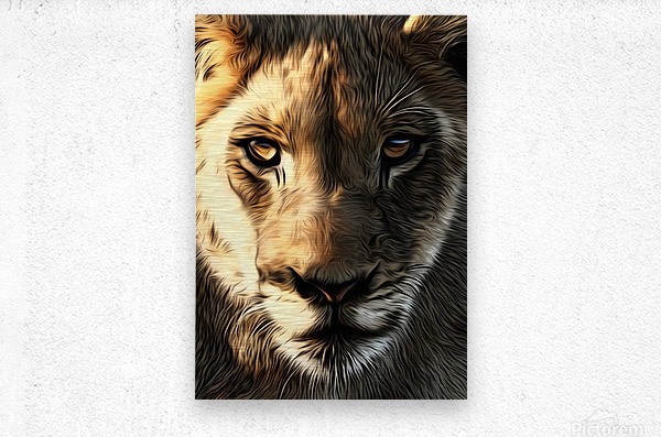 Lions Head  Metal print