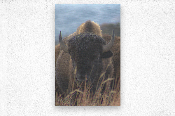 Wet Hair Dont Care  Metal print