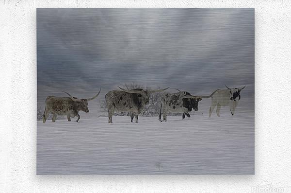 Longhorns  Metal print