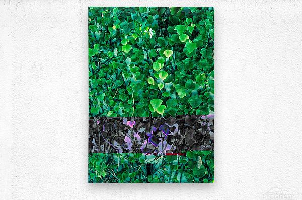 Leaves  Metal print