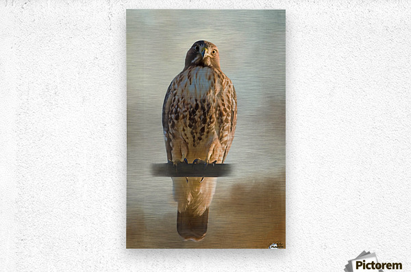 View Life - Hawk Art by Jordan Blackstone  Metal print