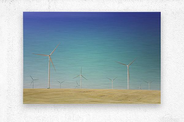 Wondering With The Wind  Metal print