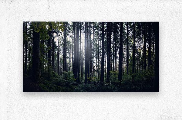 Spencer Butte Forest  Metal print