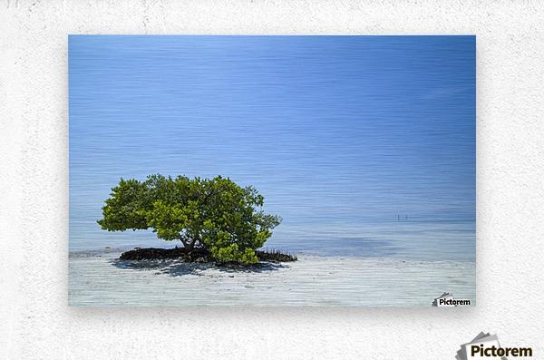 FLORIDA KEYS Lonely Tree  Metal print