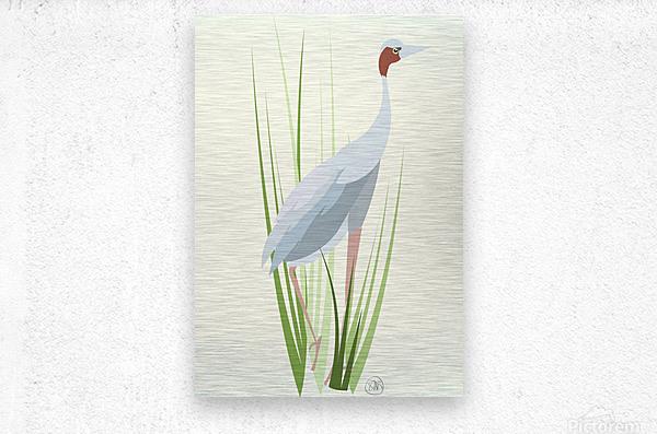 Sarus Crane  Metal print