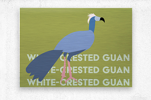 White-Crested Guan  Metal print