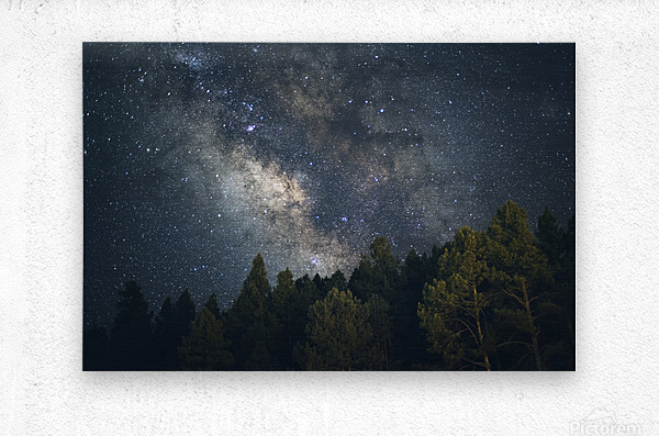 Lincoln National Forest  Metal print