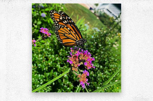 Butterfly Bliss   Metal print