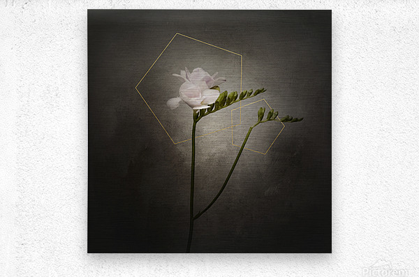 Graceful flower - Freesia   vintage style gold   Metal print