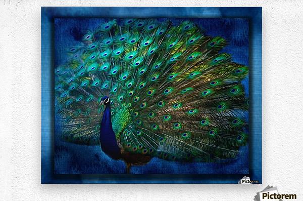 Being Yourself - Peacock Art by Jordan Blackstone  Metal print