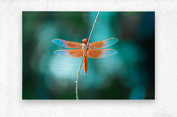 KINDNESS IS THE KEY TO MAGIC collection 1-4  Metal print