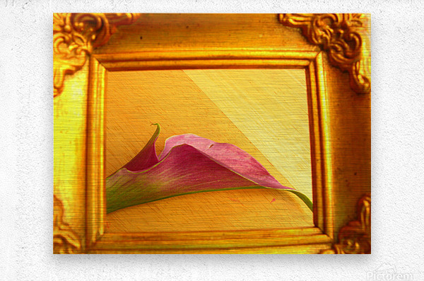 Gilded Lilly   Metal print