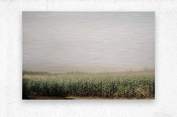 Summer Dust Cornfield  Metal print