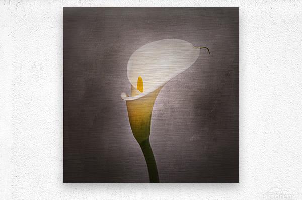 Graceful flower - Calla No. 4 | vintage style   Metal print