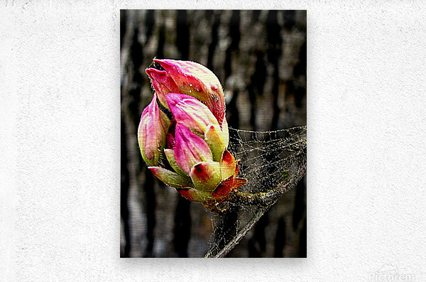 This Buds For You  Metal print