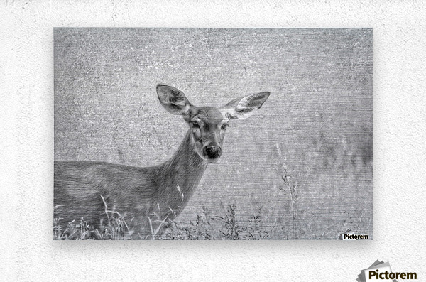 Pretty Doe  Metal print