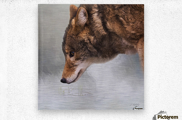 Time To Breathe - Wolf Art by Jordan Blackstone  Metal print