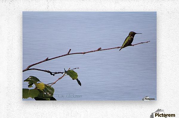 hummingbird 1  Metal print