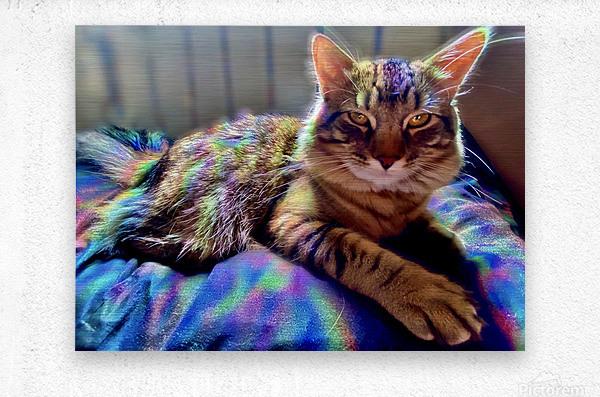 Rainbow Kitten Surprise   Metal print