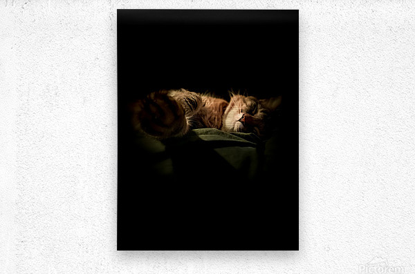 In the Shadows of the Night  Metal print