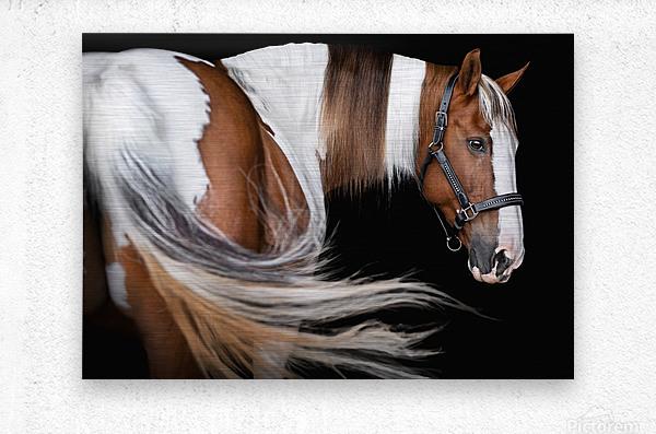 Paint Horse Portrait  Metal print