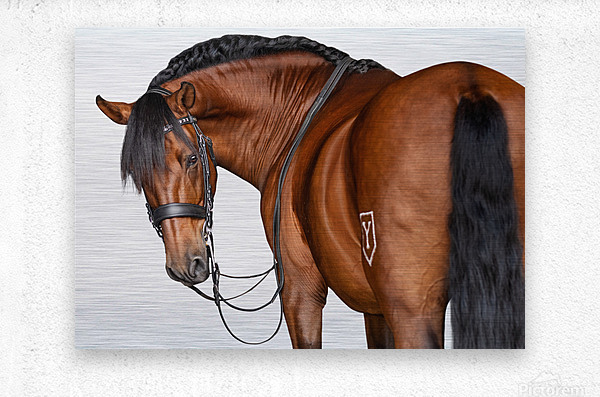 Bay Horse Portrait  Metal print