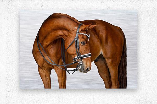 Chestnut Horse Portrait  Metal print