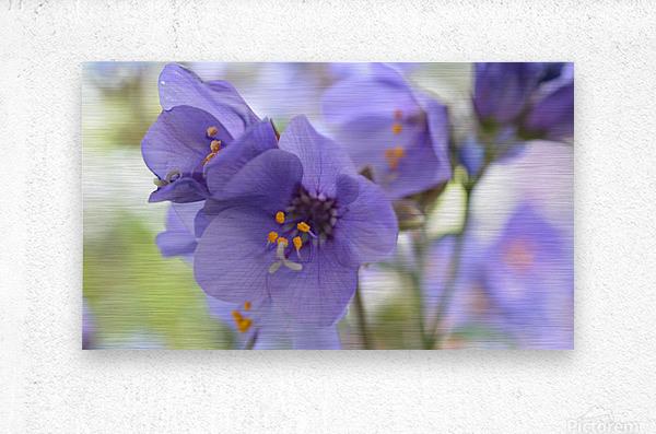Blue Floral Photograph  Metal print