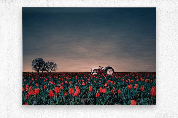 Tractors & Tulips  Metal print