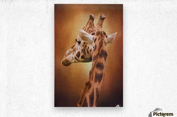 Rising Above - Giraffe Art  Metal print