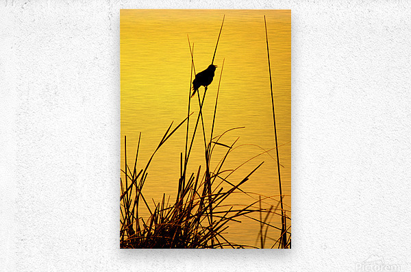 Song of First Light   Metal print