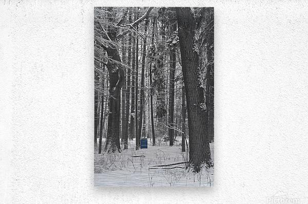 Blue Barrel in Woods  Metal print