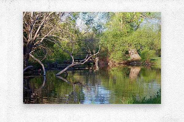 Relaxing Pond View  Metal print