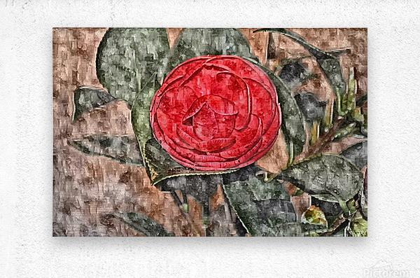 Camelia Blossom 11  Metal print