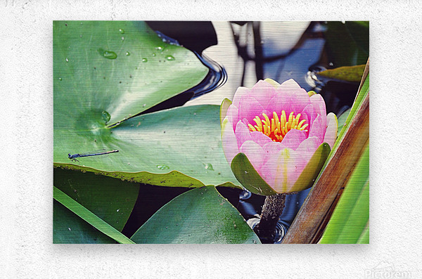 Dragonfly And Lily  Metal print