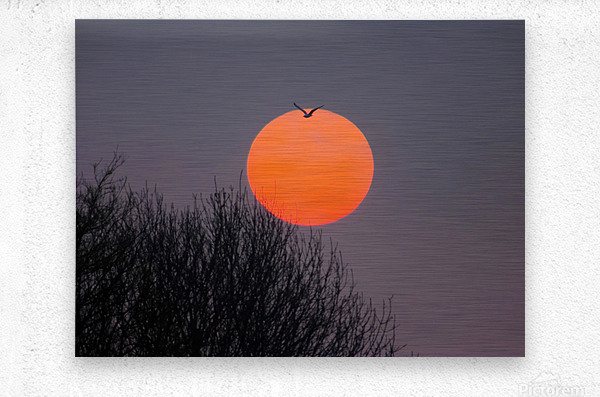 Sunrise lever de soleil  Metal print