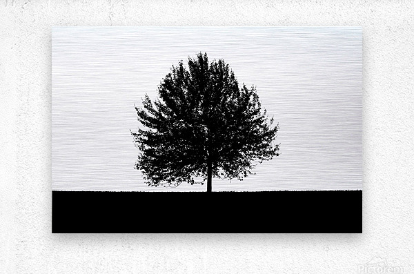 Silhouette of a lonely tree  Metal print